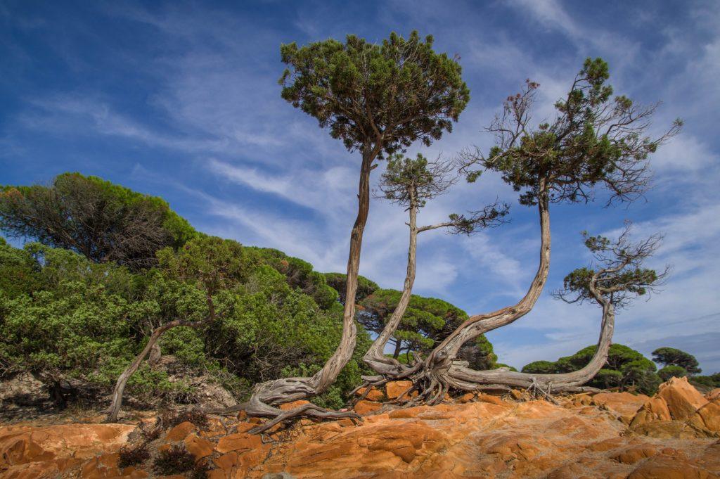 Beliebtes Reiseziel: Korsika
